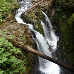 Sol Duc rainforest